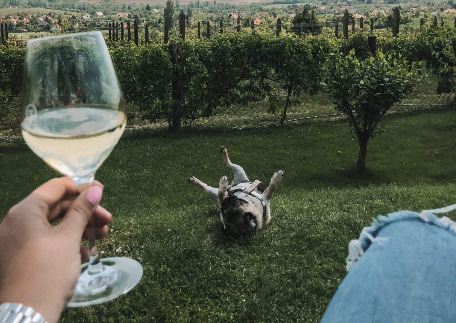 Találkozás a borral – az első boros emlékek